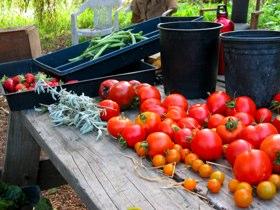 Alemany Farm Harvest.jpg