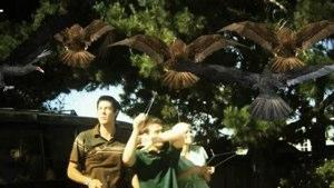 Birdemic-Trailer